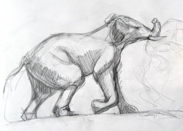 Elephant Study 3