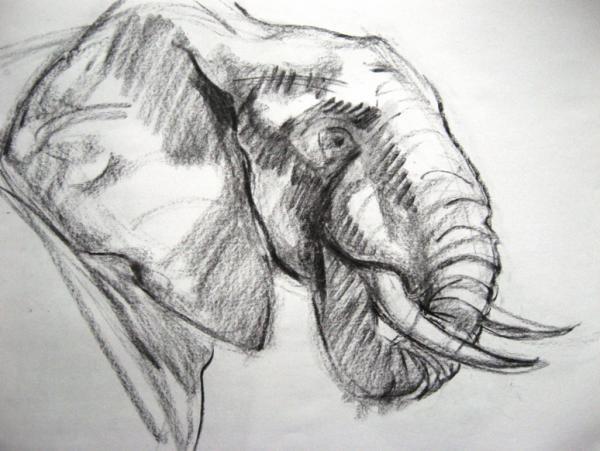Elephant Study 1