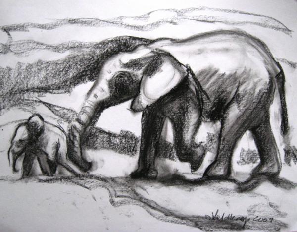 Elephant Study 2