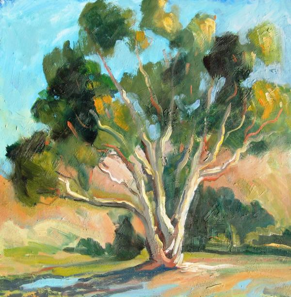 Eucalyptus in Morning Light, 12 x 12 inches, oil on panel - UNAVAILABLE