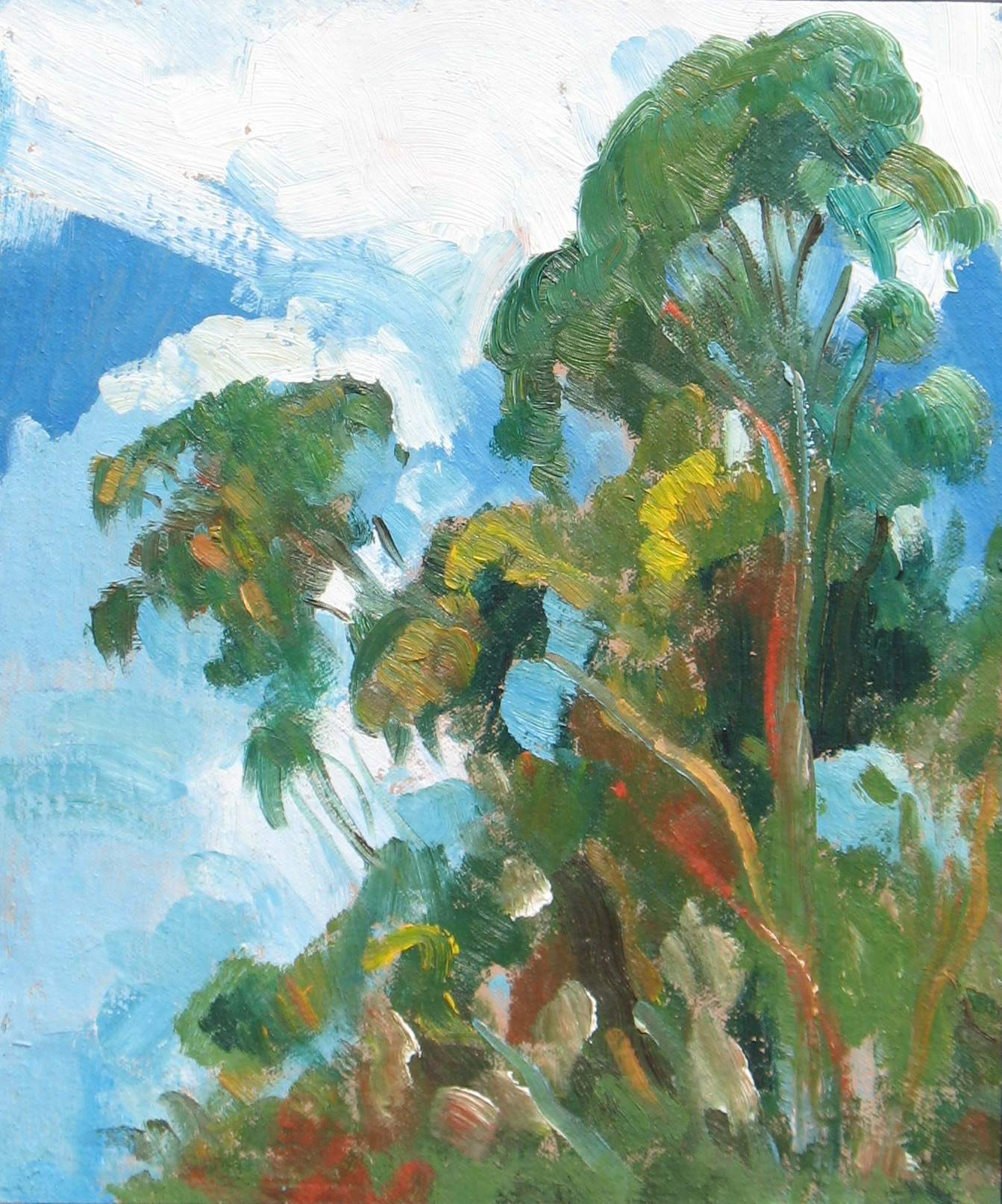 Eucalyptus Clouds