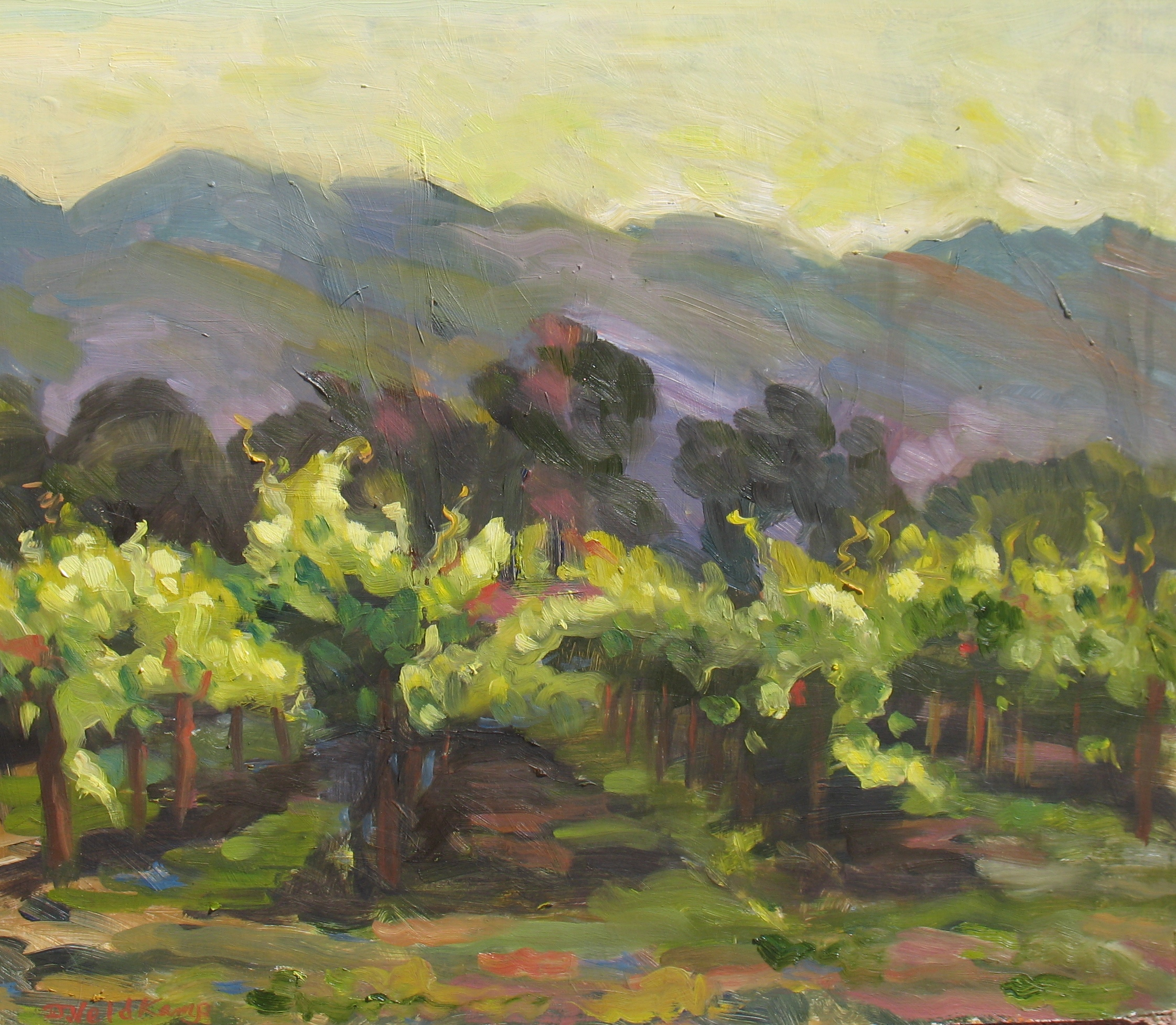 Evening vineyard, 16 x 20 inches, oil on panel - UNAVAILABLE