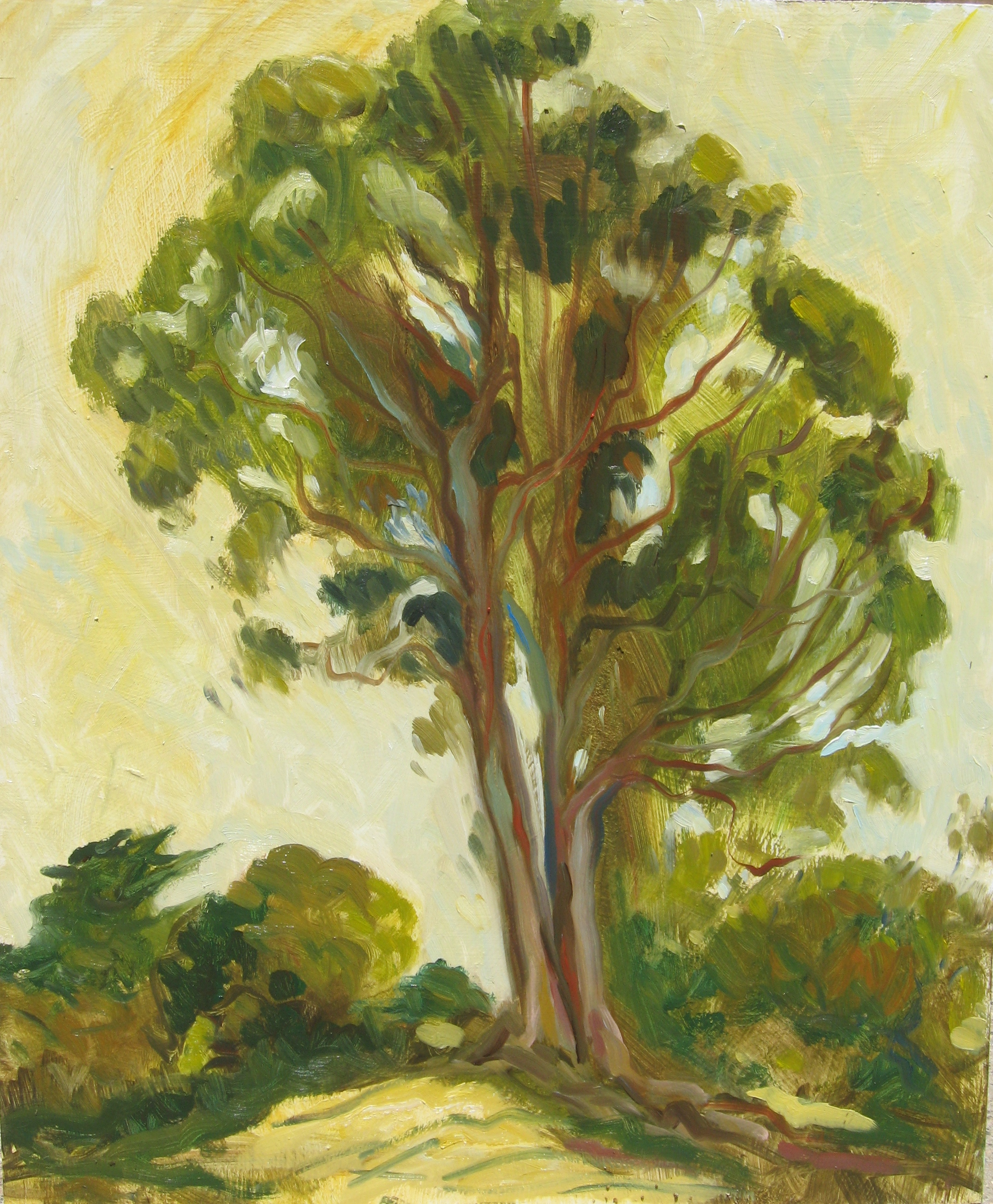 Morning Eucalyptus, oil on panel, 24 x 20 inches, 2011