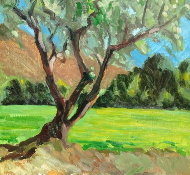 Olive tree at Talley Farms, oil on panel, 21 x 21 inches