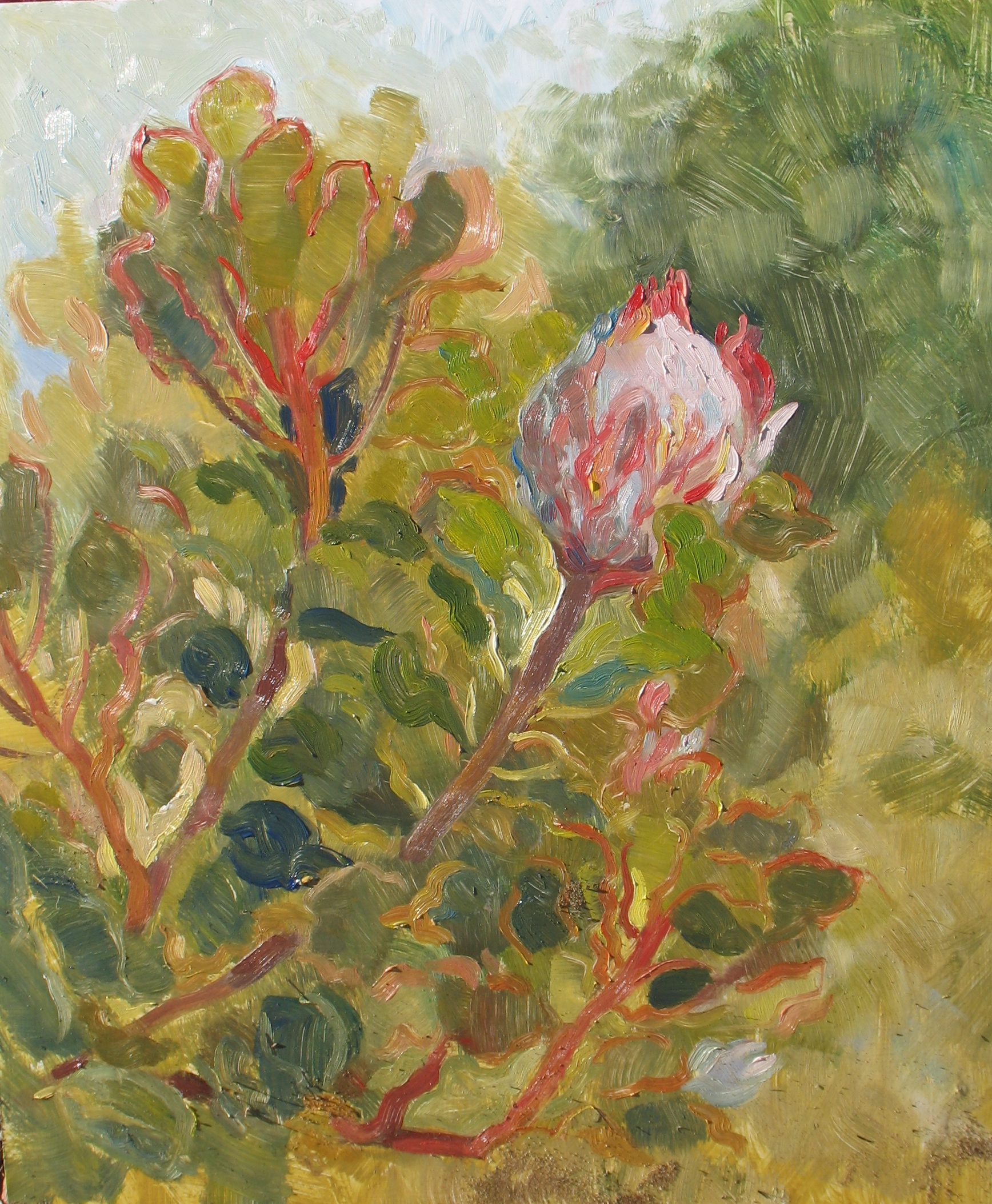 Proteas, oil on panel, 24 x 20 inches, 2011 - UNAVAILABLE